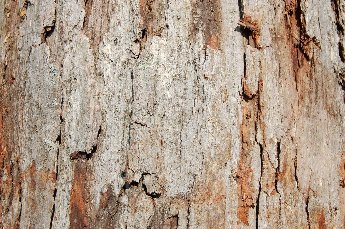 Charlotte nc hardwood tree identification mark s