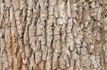 Charlotte Firewood- Ash Hardwood / Mark's Firewood