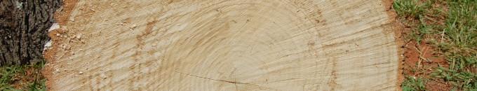 Charlotte Firewood- Cut Ash Hardwood / Mark's Firewood