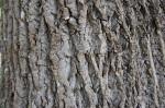 Charlotte Firewood- Poplar Hardwood