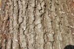 Charlotte Firewood- Red Oak Bark