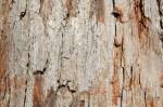 Charlotte Firewood- White Oak