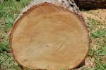 Charlotte Firewood- Cut White Oak